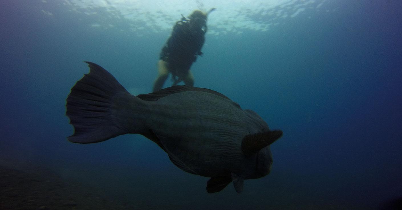 Nurkowanie Bali cena wraki podwodne