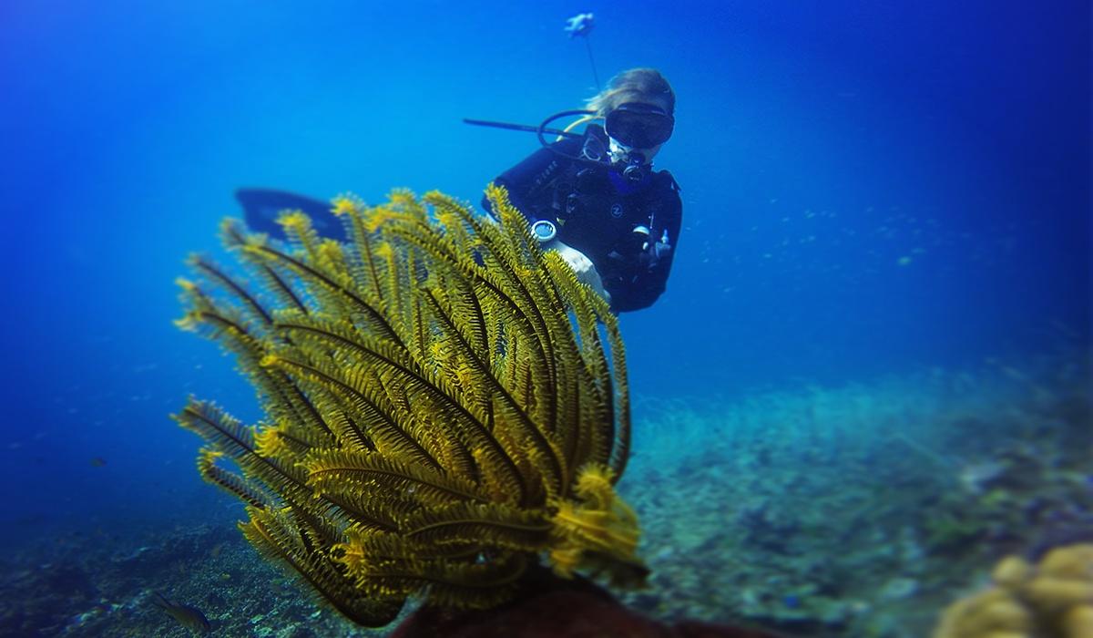 podwodne tropiki kursy nurkowe