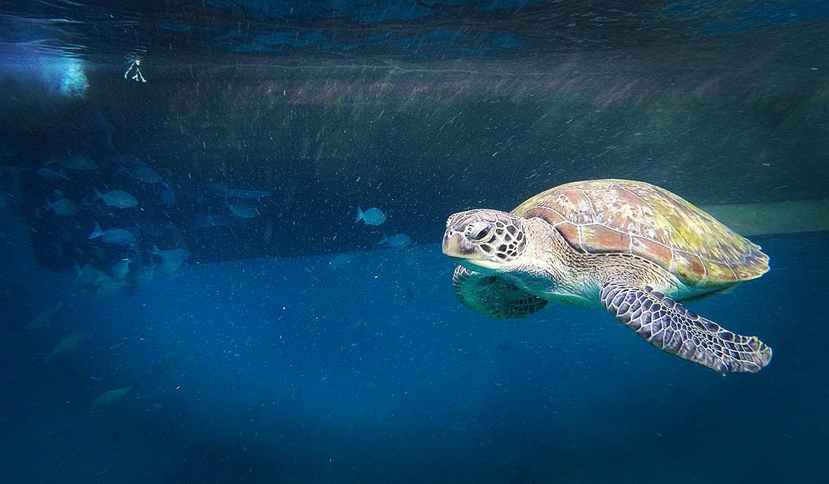 ryby podwodne tropiki malezja