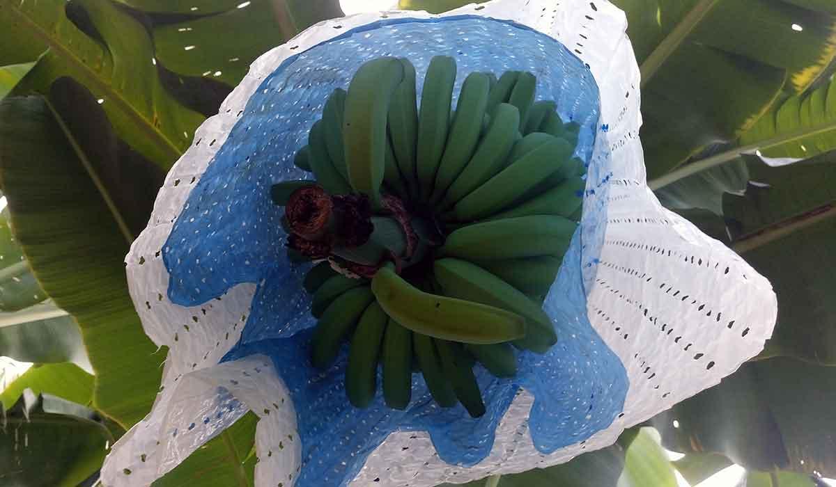 Stolica Kostaryki kostaryka banany chiquita plantacja