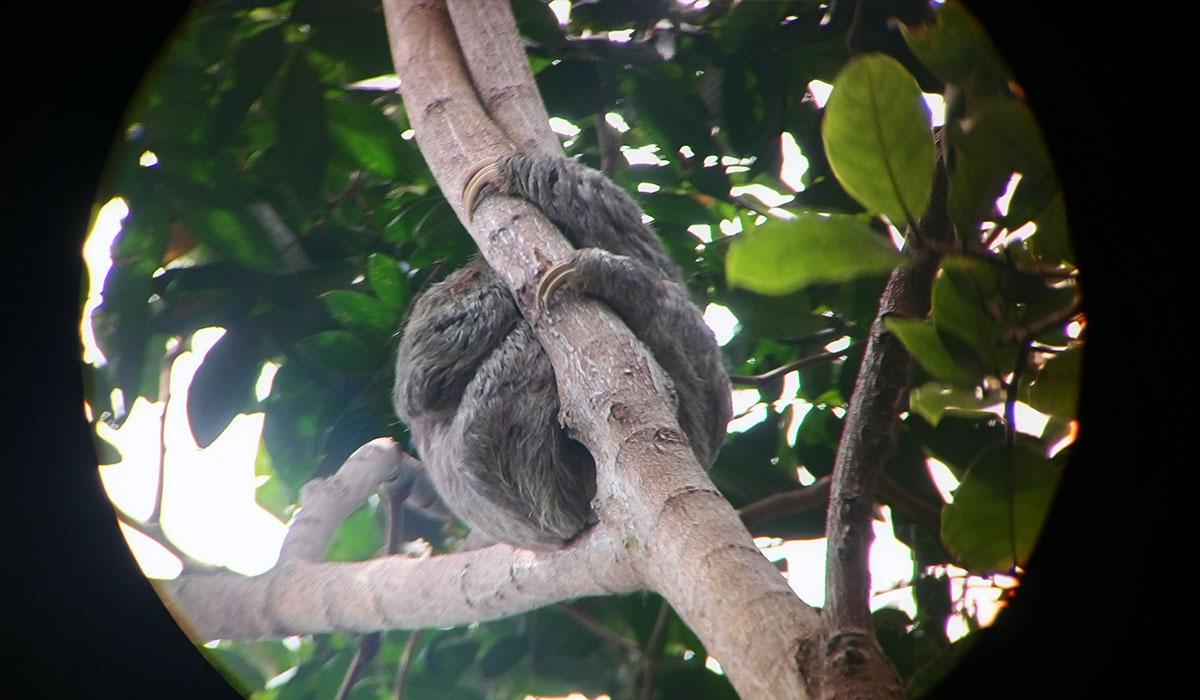 kostaryka leniwiec park narodowy pacyfik
