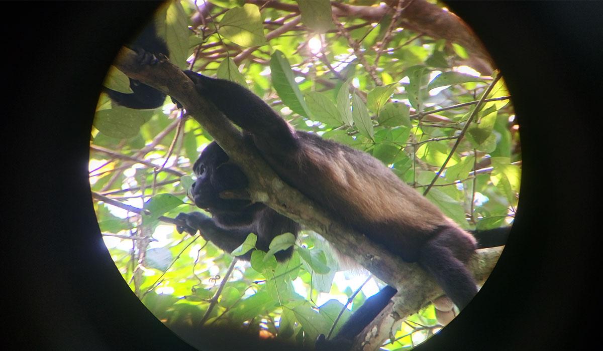 kostaryka zwierzeta małpa park
