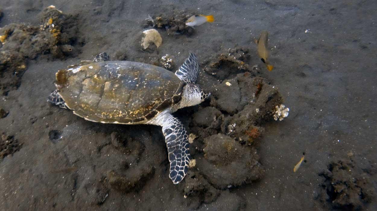 nurkowanie Bali wrak liberty zatopiony nurek