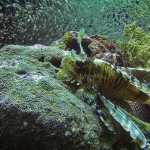 bali indonezja atrakcje przewodnik