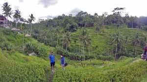 bali indonezja pola ryzowe tarasy przewodnik