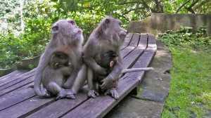 bali ubud monkey forest park malpy